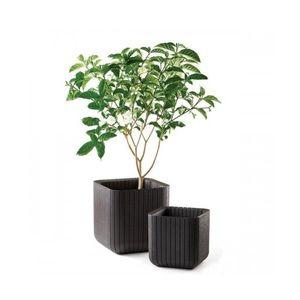 Ghiveci Cube Planter M Antracit imagine
