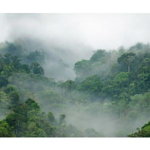 Tropical Oasis imagine