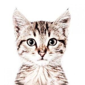 Tapet magnetic-pisica-62x265 imagine