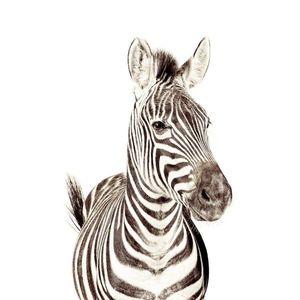 Tapet magnetic-zebra-63, 5X265 imagine