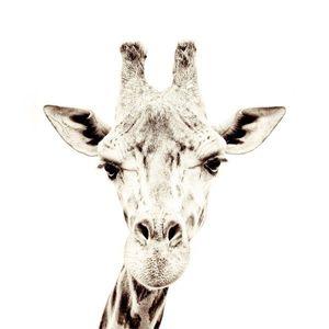 Tapet magnetic-girafa-127x265 imagine