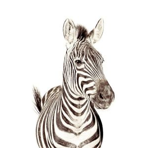 Tapet magnetic- zebra-127X265 imagine